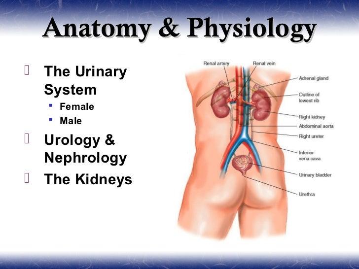 Urology And Nephrology
