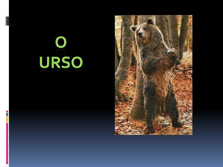 Todos os ursos têm feições comuns, com pelagem abundante,focinho e orelhas arredondadas.Tem calcanhar e 5 dedos.