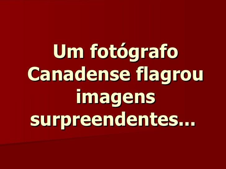 Um fotógrafo Canadense flagrou imagens surpreendentes...