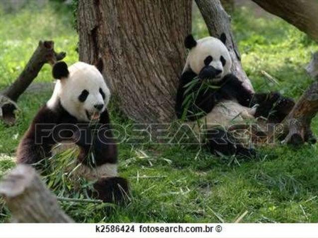 Urso panda 3B