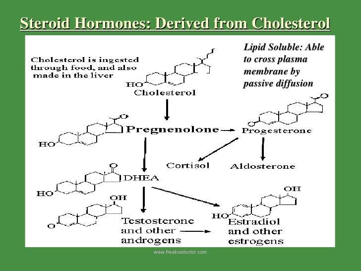 steroid passive diffusion
