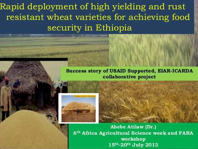 Rapid deployment of high yielding and rust resistant wheat varieties for achieving food security in Ethiopia Abebe Atilaw ...