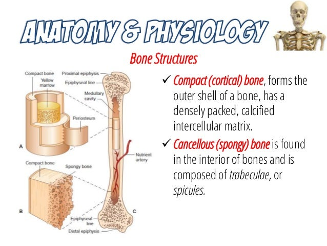 Musculoskeletal System Anatomy and Assessment