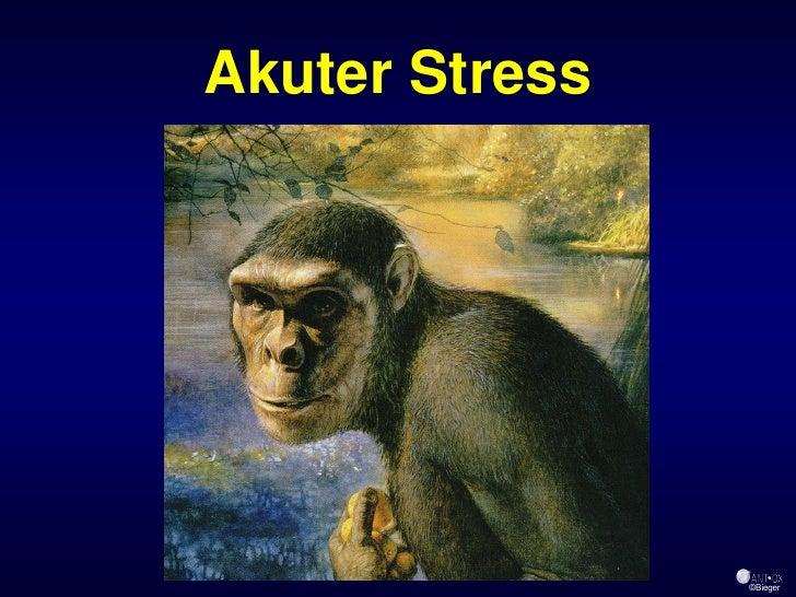 Akuter Stress                     ©Bieger