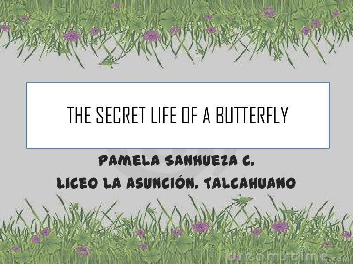 THE SECRET LIFE OF A BUTTERFLY     Pamela Sanhueza C.Liceo La Asunción. Talcahuano