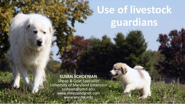 Use of livestock guardians