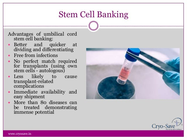 Cord Blood Banking Cost >> Umbilical Cord Storage Cost | Dandk Organizer