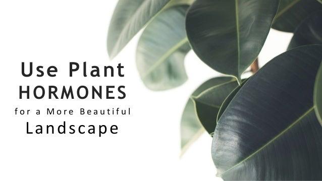 Use Plant HORMONES f o r a M o r e B e a u t i f u l Landscape