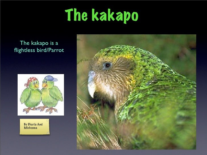 Kakapo slideshow by Dharia & Michenna