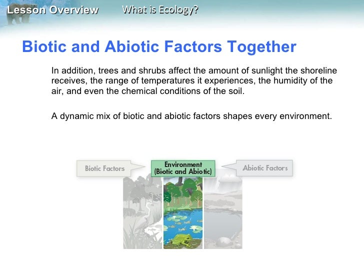 what are the abiotic components of an ecosystem