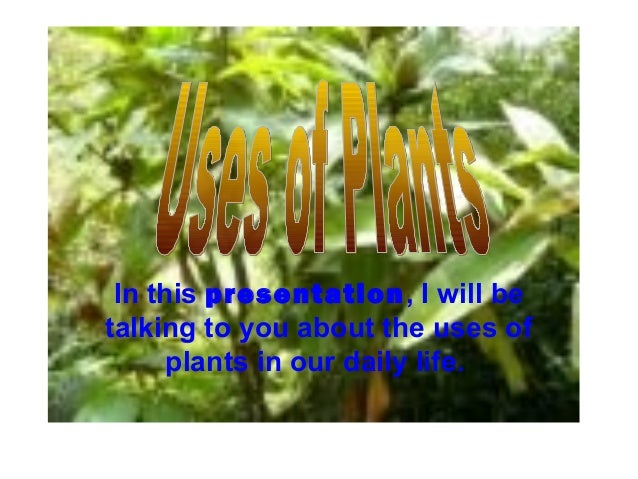 In this presentation, I will betalking to you about the uses ofplants in our daily life.