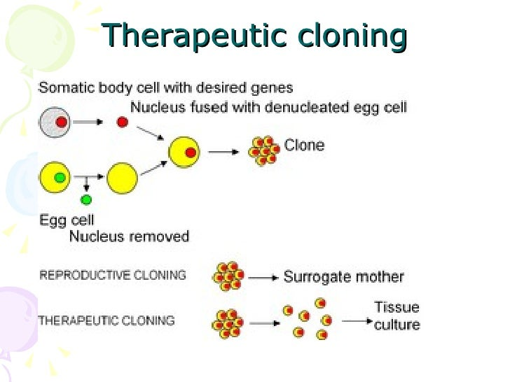 therapeutic cloning What is therapeutic cloning therapeutic cloning is defined as the process of embryonic cloning to treat specific conditions and diseases within this process, human embryonic cells are.