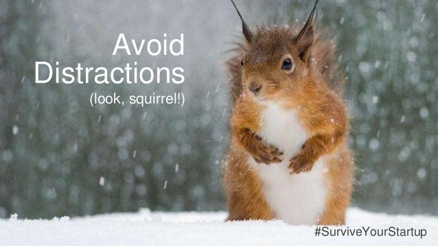 Distractions (look, squirrel!) Avoid #SurviveYourStartup