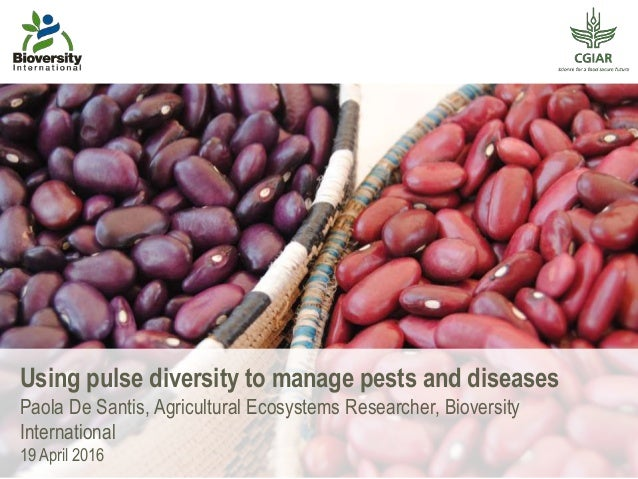 Using pulse diversity to manage pests and diseases Paola De Santis, Agricultural Ecosystems Researcher, Bioversity Interna...