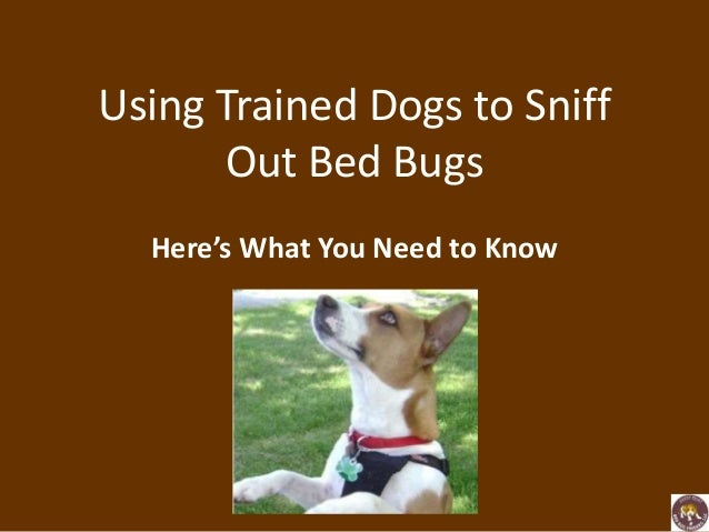 Dogs That Sniff Out Bed Bugs