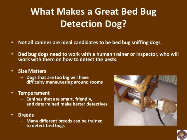 ... Dog Sniff Out Bed Bugs; 3.