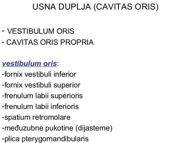 USNA DUPLJA (CAVITAS ORIS) - VESTIBULUM ORIS - CAVITAS ORIS PROPRIA vestibulum oris: -fornix vestibuli inferior -fornix ve...