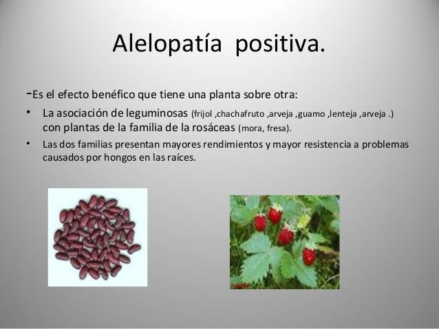 Que es la alelopatia informaciones agronomicas for Alelopatia en hortalizas
