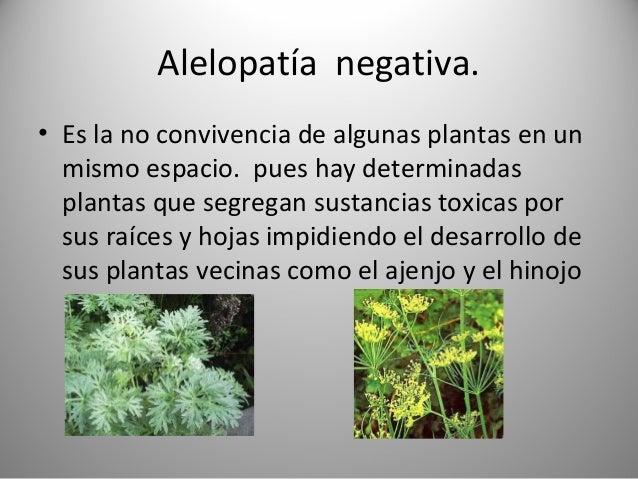 Uso de plantas en agricultura ecologica for Alelopatia en hortalizas