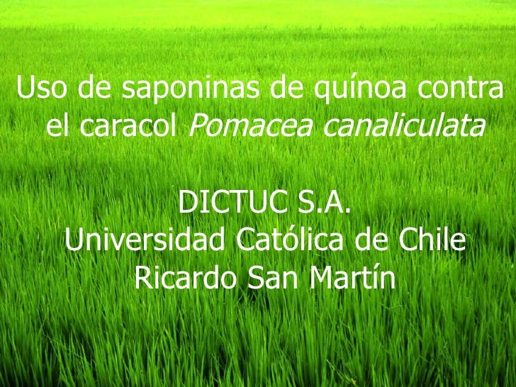 Uso de saponinas de quínoa contra  el caracol  Pomacea canaliculata DICTUC S.A. Universidad Católica de Chile Ricardo San ...