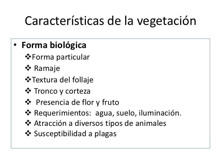 Uso ornamental de las plantas for Caracteristicas del vivero