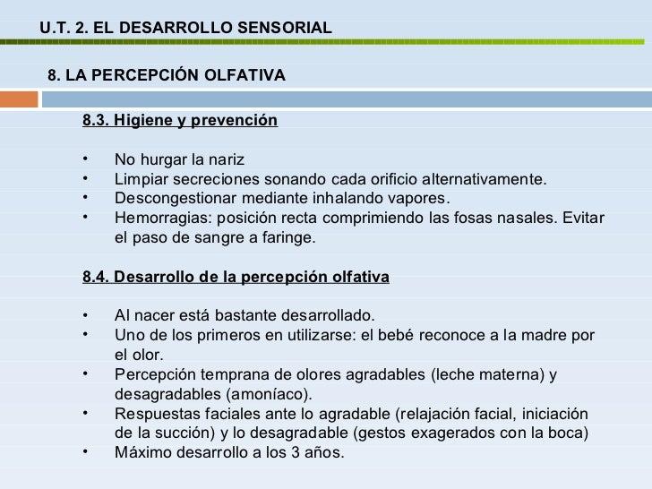 Ut 2 desarrollo sensorial for Concepto de oficina y su importancia