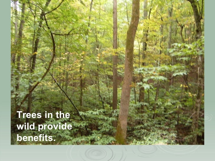 Trees in the wild provide benefits. & Urban Tree Canopy Assessment (EPAN09)