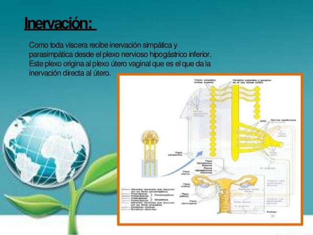 Inflamacion Del Utero Related Keywords & Suggestions