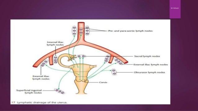 Gross Anatomy of Uterus