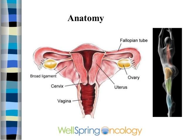 Uterus Video