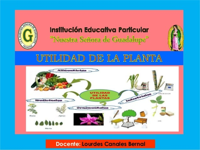 Utilidad de la planta 1 for Utilidad de las plantas ornamentales