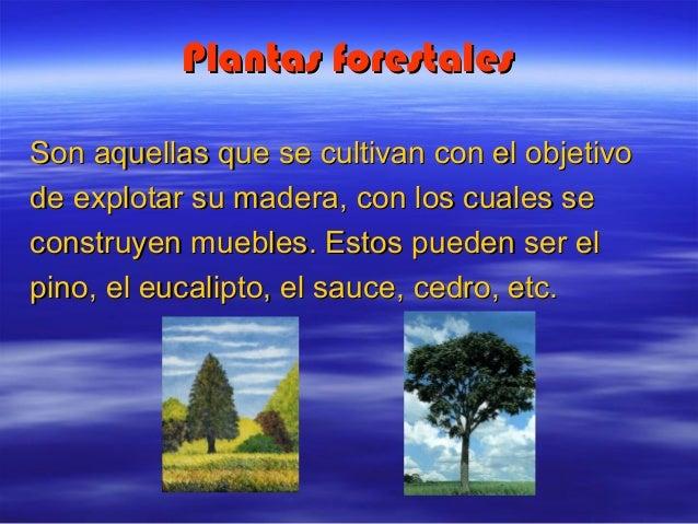 Utilidad de las plantas for Plantas ornamentales ejemplos y nombres