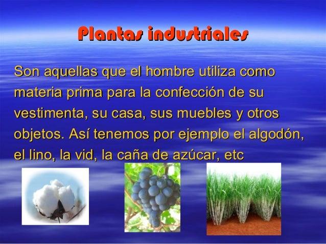 Utilidad de las plantas for Ejemplos de plantas ornamentales