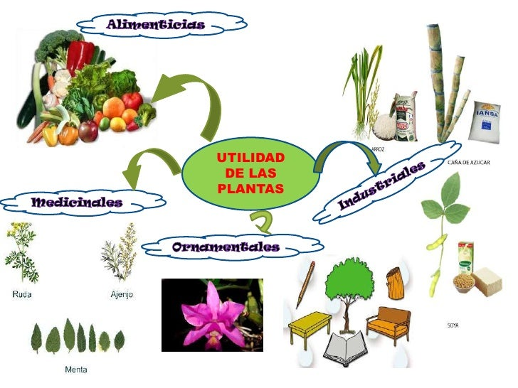 utilidad de las plantas 1 utilidad de las plantas br