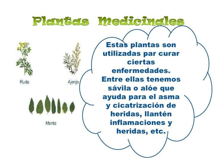 Utilidad De Las Plantas