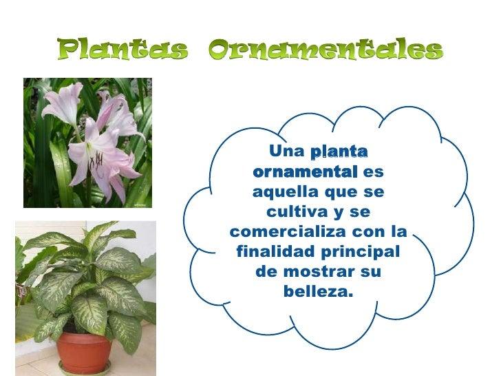 Utilidad de las plantas for Cuales son las plantas ornamentales y sus nombres