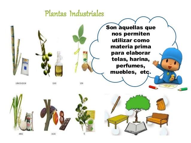 Utilidades de las plantas for Que son plantas ornamentales ejemplos