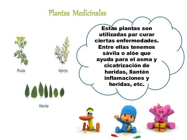 Utilidades de las plantas for Cuales son las plantas ornamentales y para que sirven