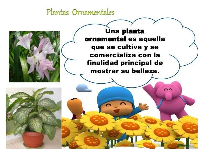 Utilidades de las plantas for Utilidad de las plantas ornamentales