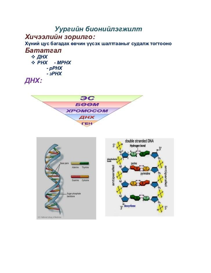 Уургийн бионийлэгжилтХичээлийн зорилго:Хүний цус багадах өвчин үүсэх шалтгааныг судалж тогтооноБататгал   ДНХ   РНХ - МР...