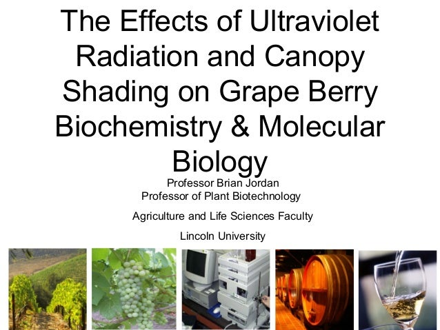 The Effects of Ultraviolet Radiation and Canopy Shading on Grape Berry Biochemistry & Molecular Biology Professor Brian Jo...