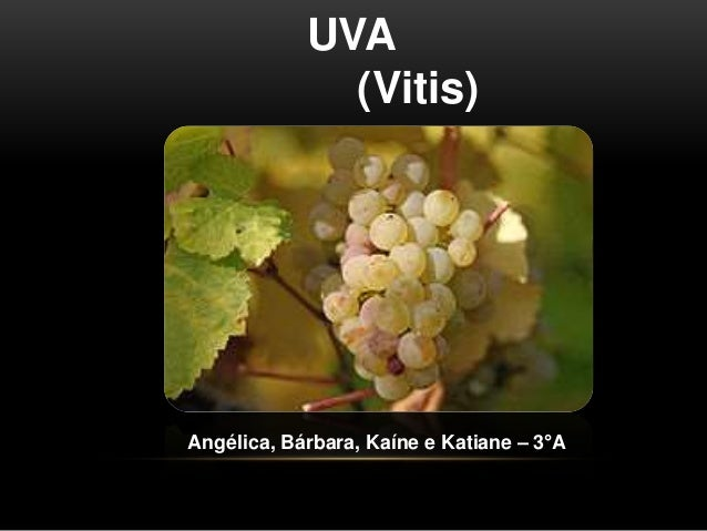 UVA  (Vitis)  Angélica, Bárbara, Kaíne e Katiane – 3°A