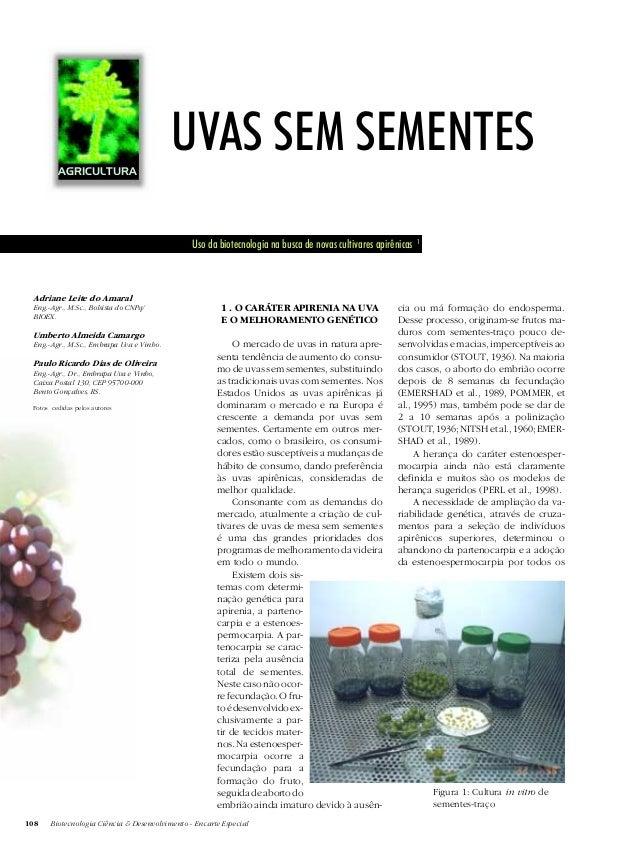 108 Biotecnologia Ciência & Desenvolvimento - Encarte Especial UVAS SEM SEMENTES Uso da biotecnologia na busca de novas cu...