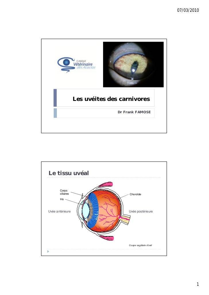 07/03/2010                   Les uvéites des carnivores                                  Dr Frank FAMOSELe tissu uvéal    ...