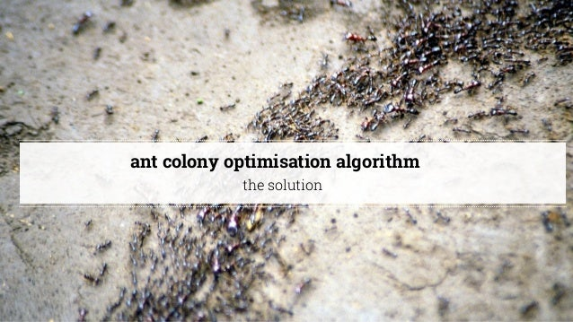 @cathycracks ant colony optimisation algorithm the solution