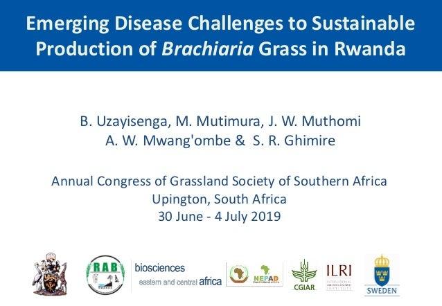 Emerging Disease Challenges to Sustainable Production of Brachiaria Grass in Rwanda B. Uzayisenga, M. Mutimura, J. W. Muth...