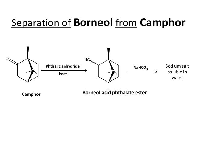 synthesis of camphor from borneol