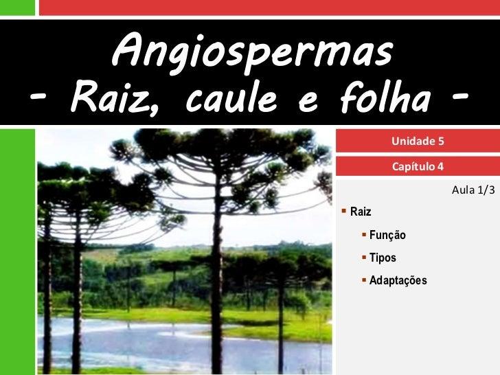 Angiospermas- Raiz, caule e folha -                         Unidade 5                         Capítulo 4                  ...