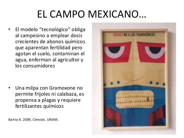 EL CAMPO MEXICANO • Los transgénicos generan dependencia de las trasnacionales y amenazan la biodiversidad y la conservaci...