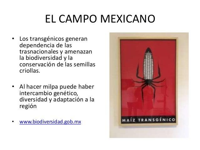 EL RETO…. • Salvar al país de la epidemia del Síndrome Metabólico, restaurando la milpa como paradigma de agricultura sust...